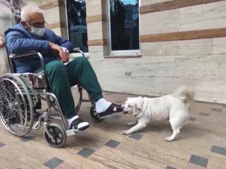 Lealdade canina: cadela espera dono doente durante 6 dias diante de hospital turco